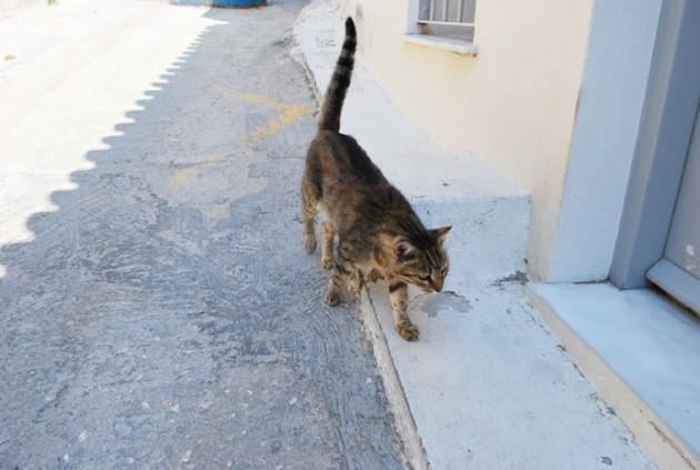 ギリシャの猫1