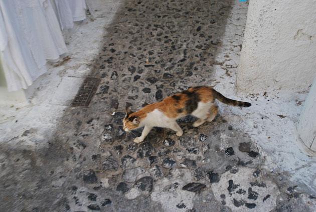 ギリシャの猫2