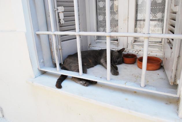 ギリシャの猫4
